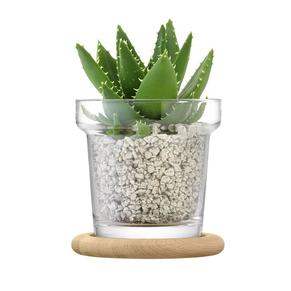 LSA Plant Pot with Oak Base