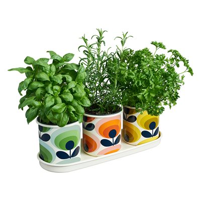 ORLA KIELY SET OF 3 HERB POTS with Tray in 70s Oval Flower Print