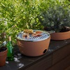 Black & Blum Portable Barbeque & Herb Garden