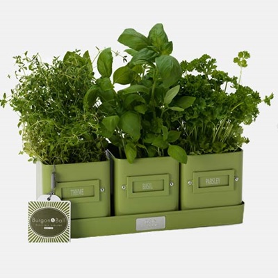 HERB POTS IN A TRAY in Lime Green by Burgon & Ball