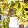 Checkmate Solar Pendant Garden Lamp