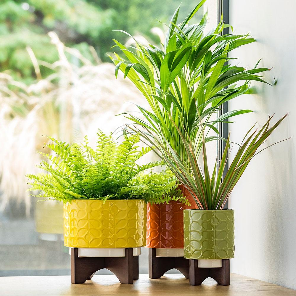 Orla Kiely Ceramic Plant Pot With Wooden Stand In 60s Stem Dandelion