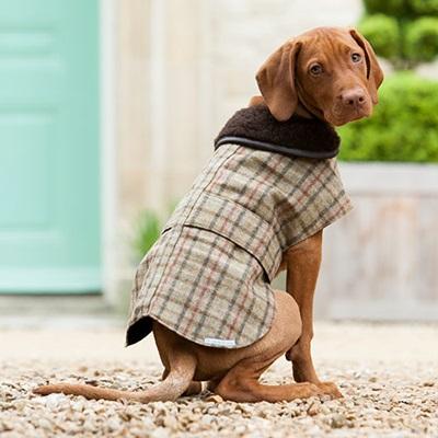 TWEED DOG COAT in Balmoral Check - Pet Clothes & Fashion | Cuckooland