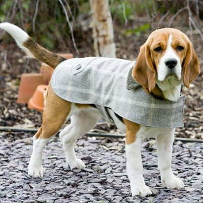 TWEED DOG COAT in Slate Tweed Design