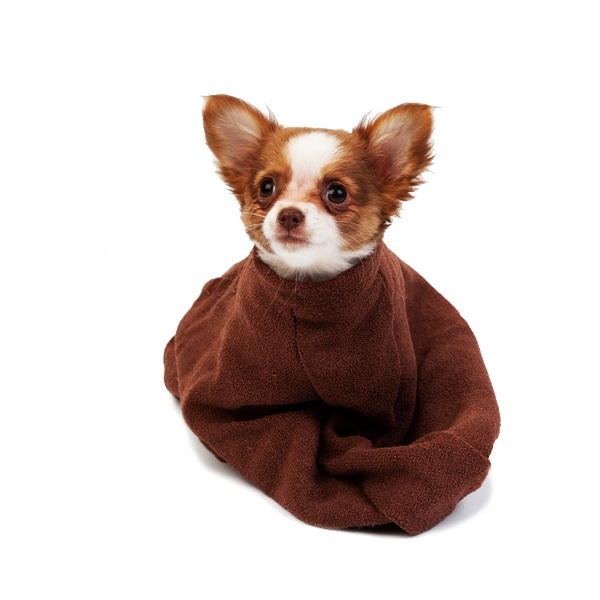 Extra-small-microfibre-doggy-bag-brown-cuckooland.jpg