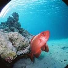 Fisheye-Submarine.jpg