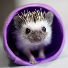 HEDGEHOG-HOUSE_2.png