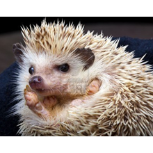 HEDGEHOG-HOUSE_5.png