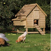 Large-Outdoor-Chicken-Coop.jpg