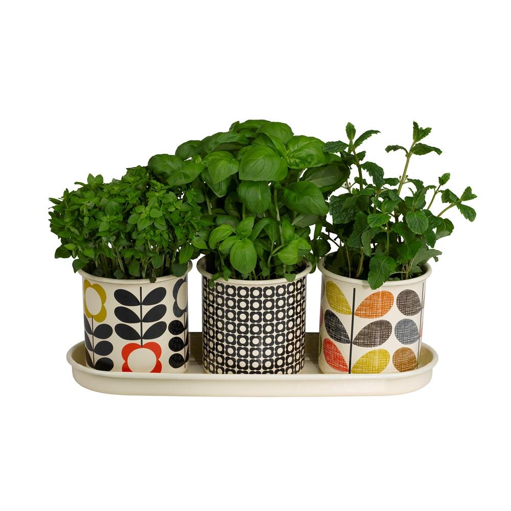 ORLA KIELY Set of 3 Herb Plant Pots on Tray