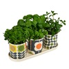 Plant Pots with Herbs