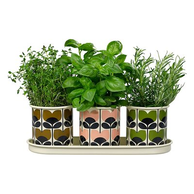 ORLA KIELY 3 HERB POTS WITH TRAY in Climbing Rose