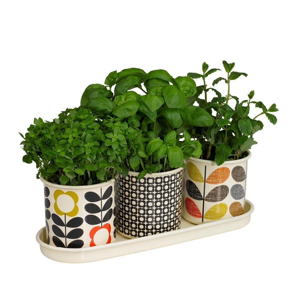 Bedroom Cabinet Designs Curtains Images For Bedroom Latest Bedroom Colour Orla Kiely Wallpaper Bedroom: Orla Kiely Set Of 3 Herb Plant Pots