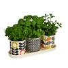 Herb Pots by Orla Kiely