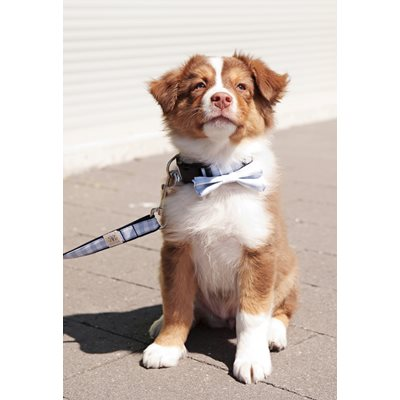 ROVER Captains Bow Tie Collar and Matching Lead