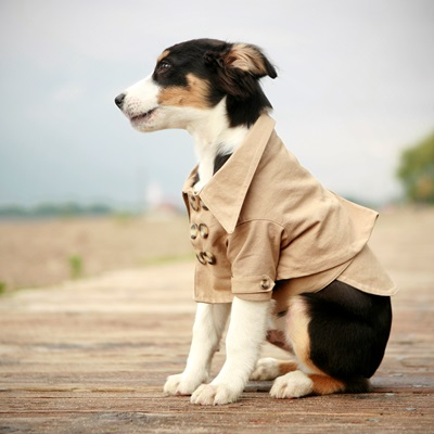 ROVER Westerly Tan Trench Coat
