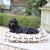 Small Dog Bed in Spaniel Print Brown