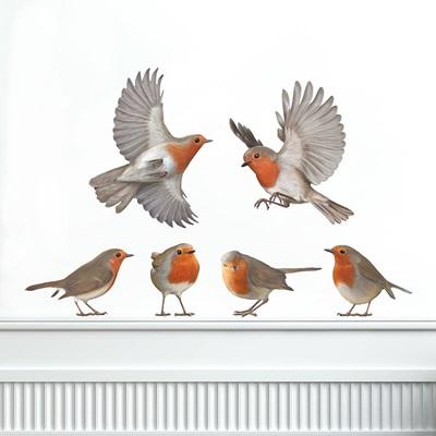 cuckoo bird and robin relationship