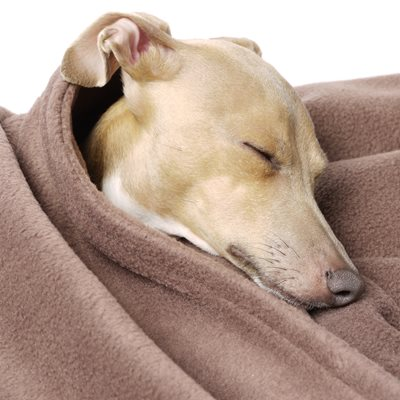DOUBLE FLEECE DOG BLANKET in Mocha