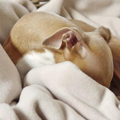 DOUBLE FLEECE DOG BLANKET in Oyster