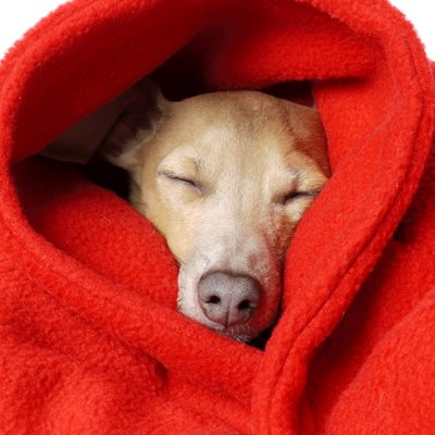 DOUBLE FLEECE DOG BLANKET in Red