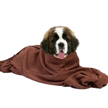 xtra-large-doggy-bag-st-bernard-highres.jpg